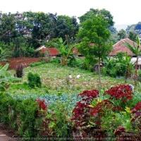 Berkebun Sayuran